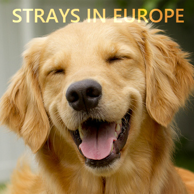 Strays In Europe